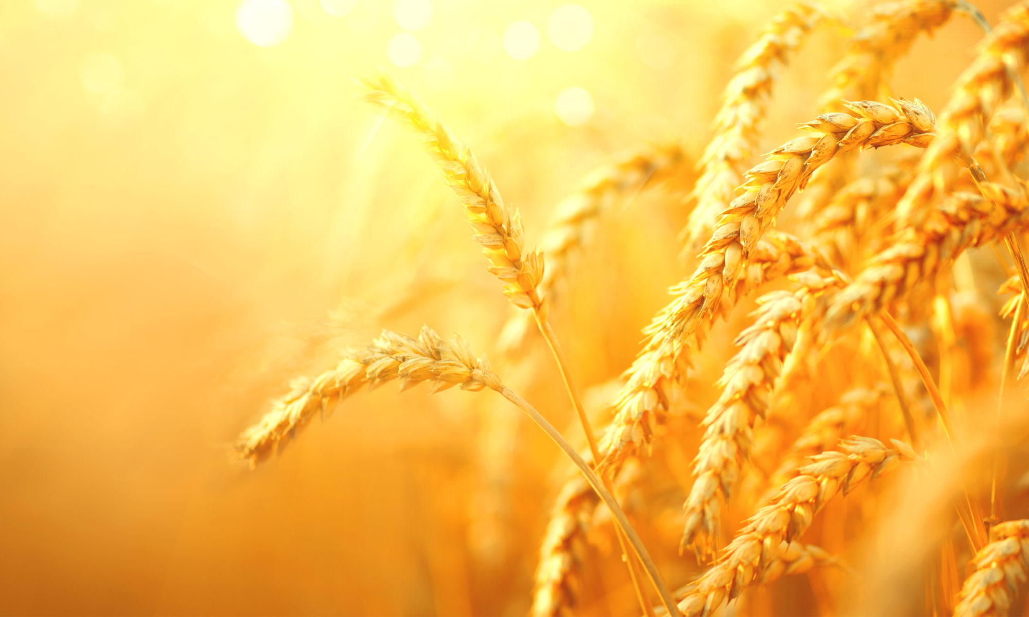 Harvest Time Ministries